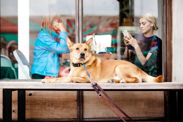 mascotas en restaurantes